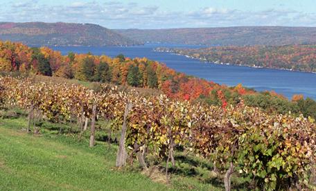 vineyards along Keuka Lake