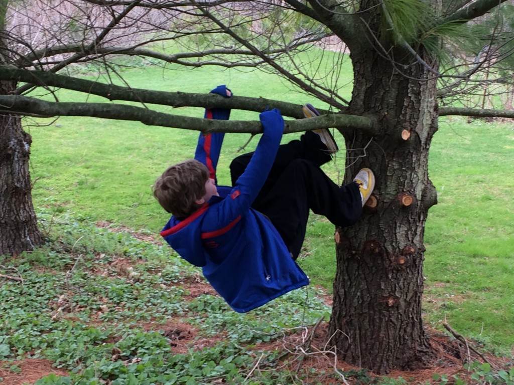 Creative spirits run in the family.  What could be better than climbing trees while we waited for the cookies to cool???